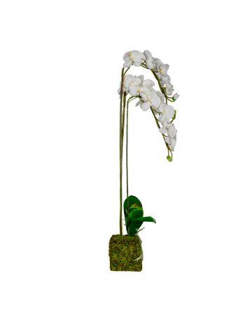 White Triple Phalaenopsis - 110cm