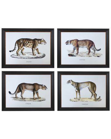 Cats Set of 4 Prints
