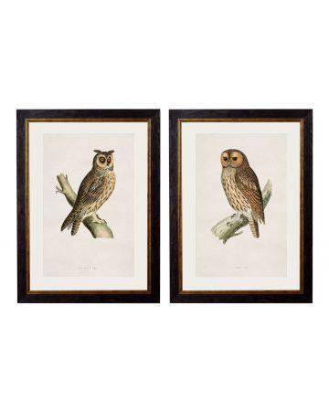 Owls Set of 2 Prints