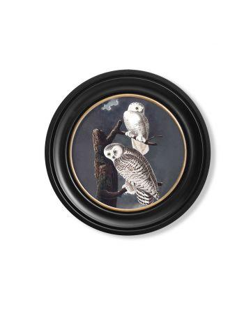 Audubon's Snowy Owl Round Print - 44cm