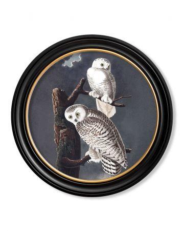 Audubon's Snowy Owl Round Print - 70cm