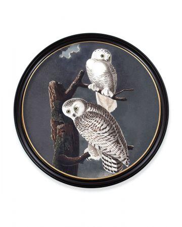 Audubon's Snowy Owl Round Print - 96cm