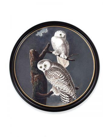 Audubon's Snowy Owl Round Print - 120cm