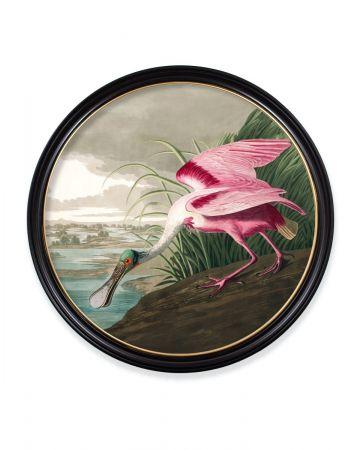 Audubon's Roseate Spoonbill Round Print - 96cm