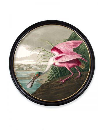 Audubon's Roseate Spoonbill Round Print - 120cm