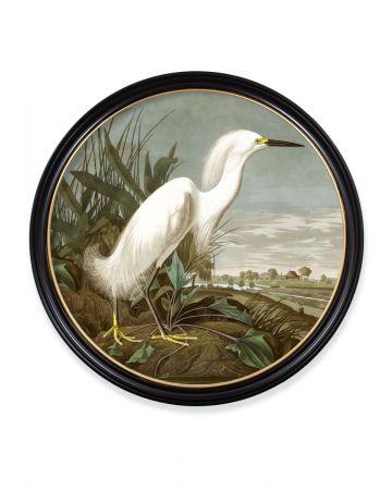Audubon's Snowy Heron Round Print - 96cm