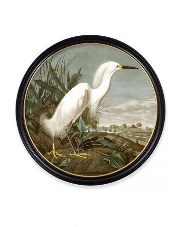 Audubon's Snowy Heron Round Print - 120cm