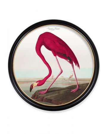 Audubon's American Flamingo Round Print - 96cm