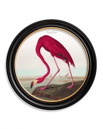 Audubon's American Flamingo Round Print - 70cm