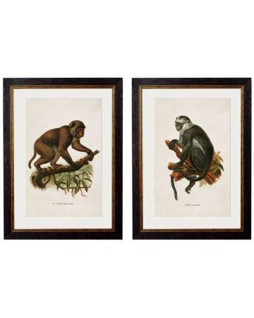 Monkeys I Set of 2 Prints
