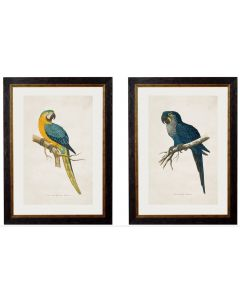 Macaw Parrot Set of 2 Prints - Yellow & Blue