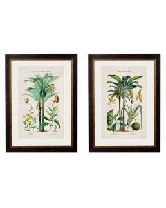 Study of tropical plants - set